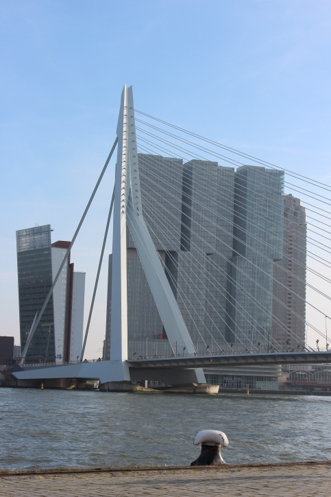 One of the famous sights in Rotterdam, the Erasmusbrug.