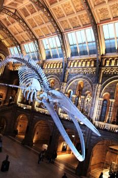 London - Whale Skeleton