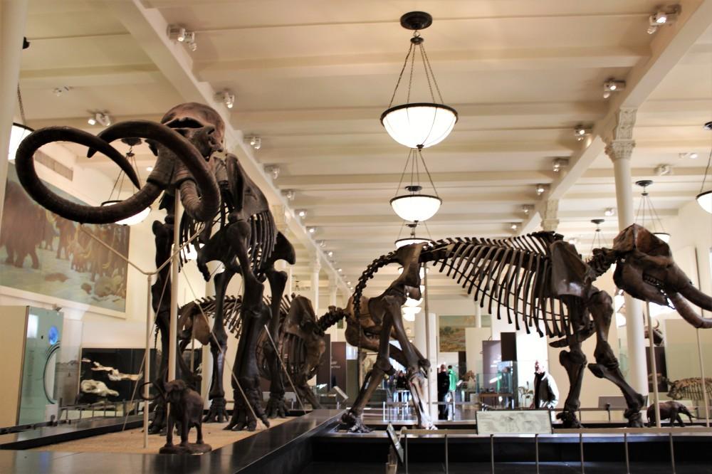 NYC - Dinosaurs